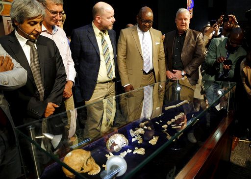 Fossils of a species belonging to the human family tree whose remnants were first discovered in a South African cave in 2013 are unveiled at the Maropeng Museum, near Magaliesburg, South Africa, Tuesday, May 9, 2017. The species lived several hundred thousand years ago, indicating the creature was alive at the same time as the first humans in Africa, scientists said Tuesday. (AP Photo/Denis Farrell)