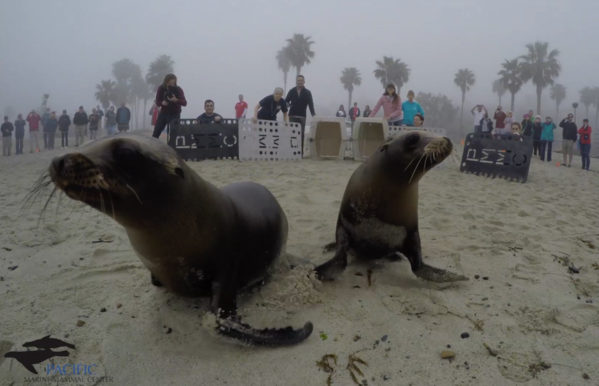 The Hero Fest will feature a 360 degree Virtual Reality experience by The Pacific Marine Mammal Center