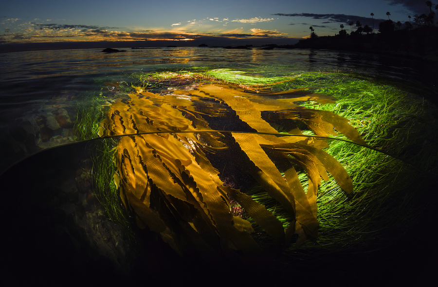 A Kelp Perspective by Sean Hunter Brown - 3rd prize winner professional division