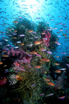 I see the coral reef as the most inspirational place to learn from nature. I have written a book called, <i>Coral Reefs - Cities Under the Sea</i>, that explores how the reef functions like a city and offers guidance for us in how to live more gently on the planet.  This is the cover photo from that book. (Richard Murphy)