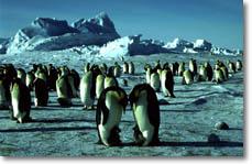 Emperor Penguins (awi-bremerhaven.de)