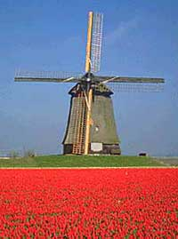Tulip field in the Netherlands. (www.growingtulips.com)