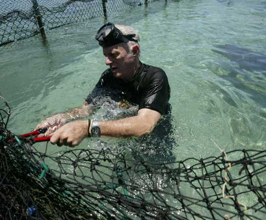 Cutting chain link fence to let dolphins escape (Daniel Morel)