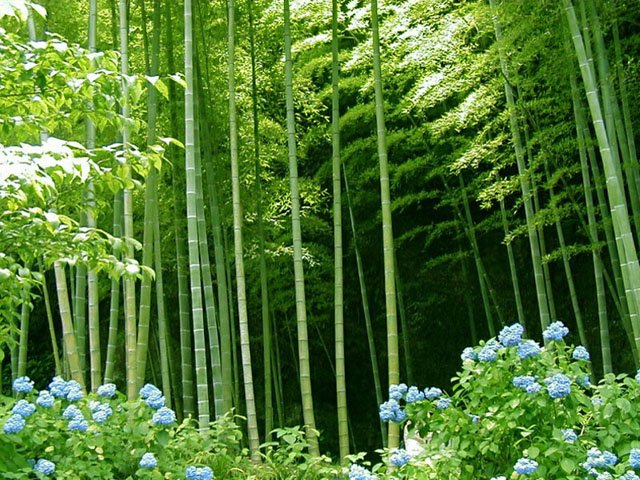 Bamboo forest (Garden of Eadon ())