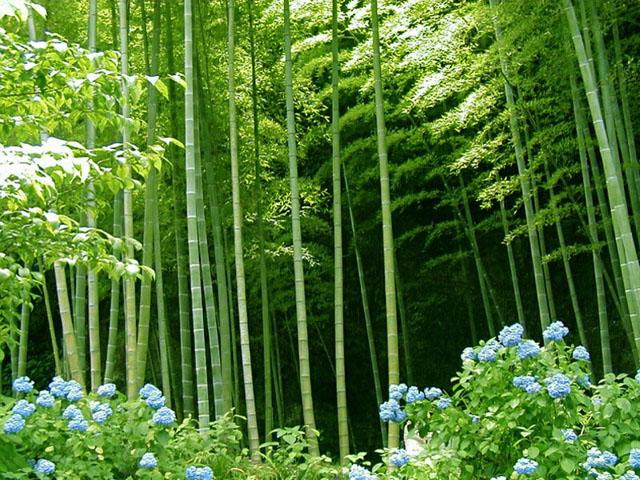 Bamboo forest (Garden of Eadon ())