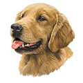 This is the kind of dog that Bailey is