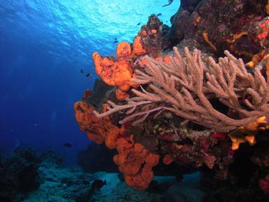 Coral and sponges<br>Photo courtesy of Jim Dean