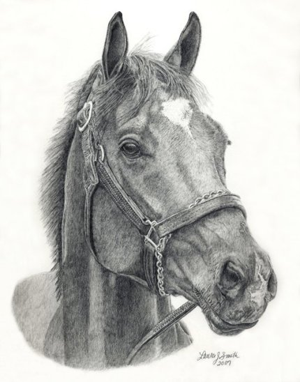 This is a drawing of Barbaro's face. (www.Laurajsmith.com)
