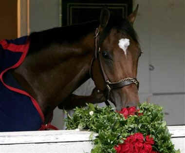 This is Barbaro in his stall with flowers. (https://tuesdayhorse.files.wordpress.com)