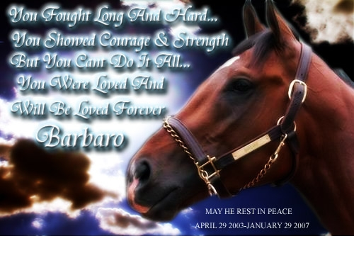 this is a short poem about Barbaro. (https://i145.photobucket.com)