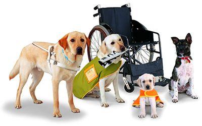(servicedog.com)