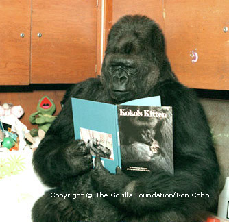 Koko can even read! <br>(http://www.koko.org/world/pics_g1.html)