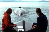 Earle following whales (www.achievement.org/.../ear0/large/ear0-012.jpg)