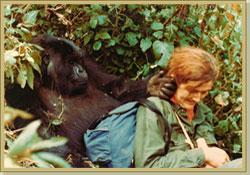 Dian Fossey receives a friendly touch from Puck,  (http://www.gorillafund.org/dian_fossey/)