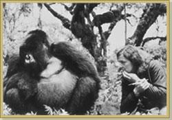 Dian with favorite gorilla, Digit (http://www.gorillafund.org/dian_fossey/)