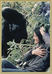 Dian imitating the gorilla's gestures. (http://www.gorillafund.org/dian_fossey/)