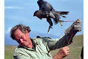 Jim Fowler in action with an eagle (http://www.georgiaencyclopedia.org/nge/Multimedia.jsp?id=m-11120)