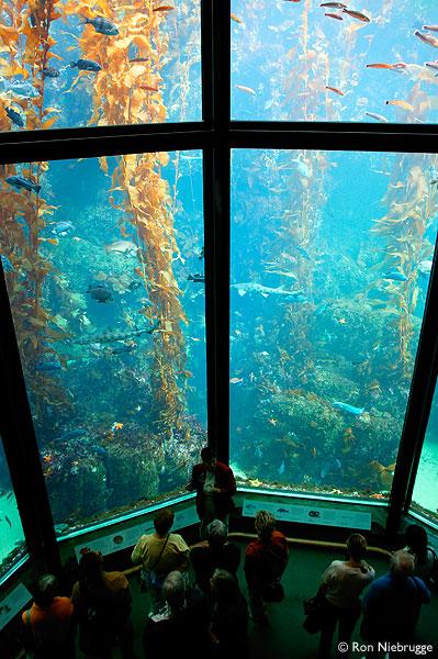 Kelp forest exhibit at Monterey Bay Aquarium (http://www.wildnatureimages.com/Monterey%20Bay%20Aquarium%202.htm)