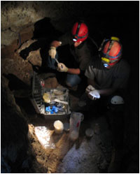 (L to R) Nick Taylor and Adin Pemberton collecting samples in Carlsbad Caverns, NM. (Image courtesy of Hazel Barton)