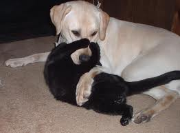 This cat and dog are wrestling. (http://pets.webshots.com/photo/1339494431069343546vhrNNq)