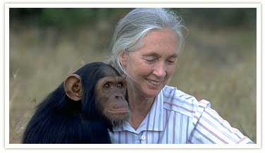 Jane Goodall and a chimpanzee. (www.wsu.edu)