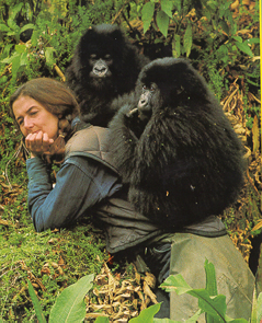 life in the wild in gorillas in the mist by dian fossey Parents need to know that gorillas in the mist is a 1988 movie based on the life and work of dian fossey, who saved mountain gorillas from extinction in the '70s and '80s.