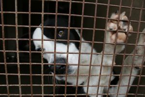 These are puppy mills which supply pet stores (http://www.sxc.hu/profile/acadmeic (acadmeic))