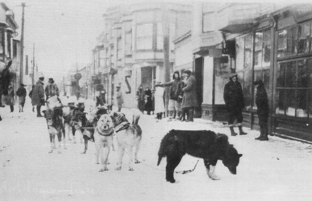 Balto and his sled team arrived at Nome with serum (Mundivaganti)