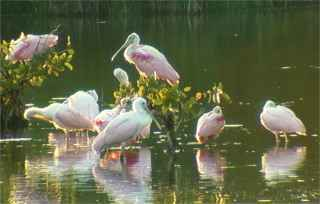 Sanibel National Wildlife Refuge <br>(http://www.birdingamerica.com/Florida/dingdarling.htm)