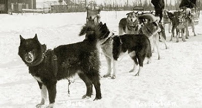 Balto and his team after reaching Nome. (www.animalplanet.com ())