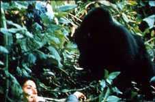 <a href=http://www.reuniontheband.com/Dian%20Fossey%20touch.jpg>Dian & a Gorilla</a href>
