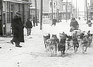 Nome Rescue (https://www.pbs.org/wnet/nature/sleddogs/images/nome_rescue.jpg)
