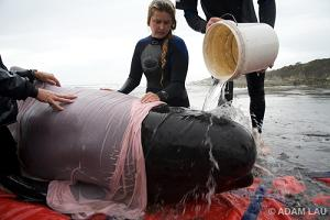 Emily helping save a beached whale (Emily Hunter)