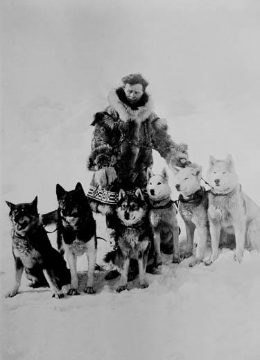 Seppala with Team (The Carrie M. McLain Memorial Museum, Nome, Alaska)